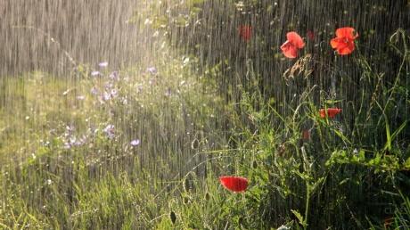 Дожди и грозы накроют почти всю территорию Украины