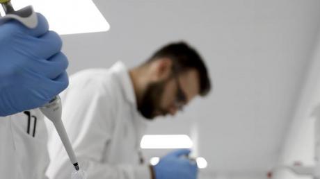 ученые, исследования, хомяк, антитела, опыты