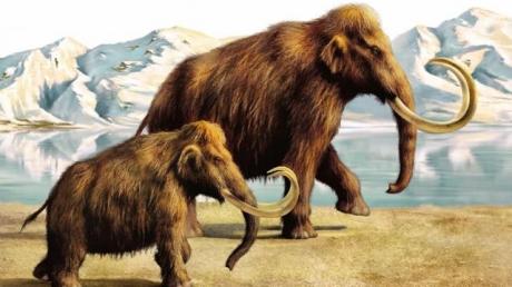"""Ученые из Гарварда готовятся """"взорвать"""" мир фантастическим научным экспериментом: скоро по планете снова будут шагать гигантские мамонты, выращенные в искусственной матке"""