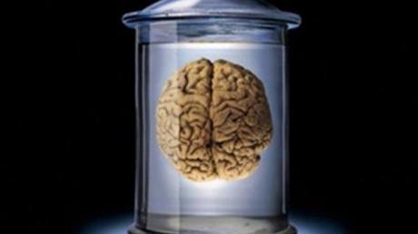 Ученые, лаборатория, мозг, эксперимент, разумная деятельность, США