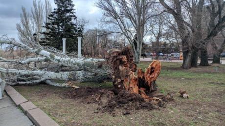 Непогода в Украине: Одесса и Николаев под ударом стихии, деревья вырывает с корнями, крыши и рекламные щиты разлетаются