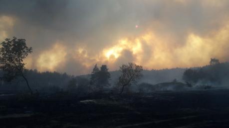 Из-за мощных пожаров в Харьковской области объявлена ЧС