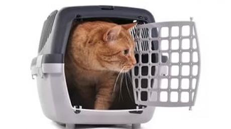 кот, Пермь, приставы, арест, долг
