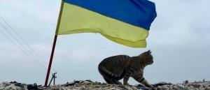 коты, война, донбасс, животные, военные, видео, армия украины, всу