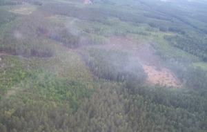 чернобыль, пожар, чернобыльская пуща, зона отчуждения
