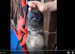 рыбалка, видео, рыбаки, приморский край, россия, чудовище