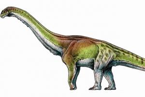 динозавр, открыие, аргентина, ученые, палеонтология, Patagotitan Mayorum