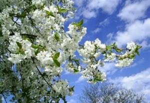 прогноз погоды, погода в украине, температура воздуха, потепление в украине, весна в украине