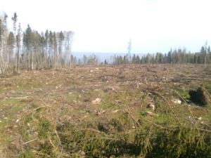 лес, уничтожение