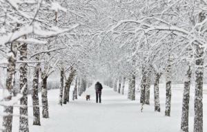 снег, осень, погода, снегопад, похолодание, прогноз погоды