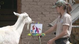 сша, мир животных, козел, картины