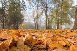погода, осень, туман, прогноз погоды, украина, осадки, тепло