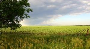 Мины, поля, дороги, аграрии