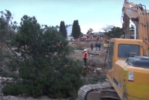 новости, Крым, преступления, оккупанты, Севастополь, крымчане, вырубка деревьев, уничтожение природы