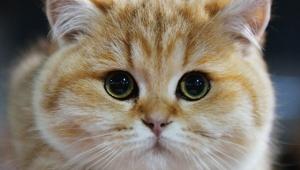кошка, задушила, младенец, коляска, Харьковская область, МВД, Нацполиция, несчастный случай, криминал, новости Украины
