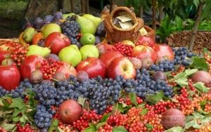 украинские аграрии, экспорт фруктов и ягод, экспорт  яблок, международная торговля