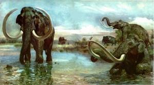 генетика, ученые, слоны, мамонты