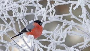 кульбида, январь, зима, снег,  погода, прогнз погоды, новости украины