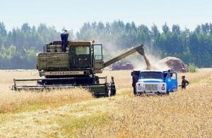 Урожай, пшеница, Украина, Кульбида, Гидрометцентр