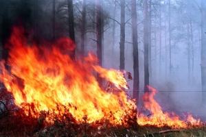 пожар, аргентина, смерть, лес