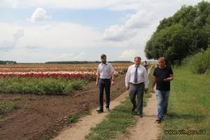 розовое поле в Винницкой области, голландско-украинское предприятие, миллион алых роз в Украине