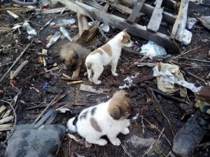 зона ато, пески, украинские военнослужащие, стая щенков, волонтеры