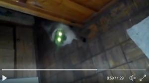 видео, сатана, соцсети, кот, пух, кухня, россия