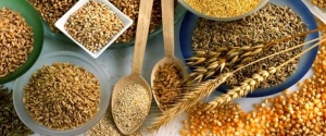 земрновые культуры, сбор урожая, агропромышленность украины