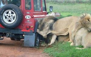 происшествия, Африка, общество, мир животных