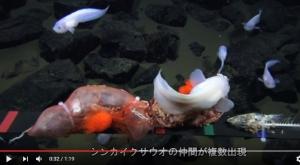 япония, рыба, видео, глубоководная рыба, липаровые рыбы, морской слизень