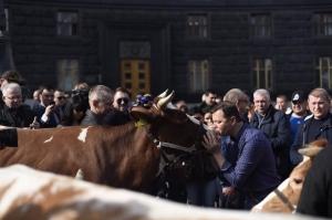 олег ляшко, политика, общество, киев, митинг, коровы, радикальная партия, протест