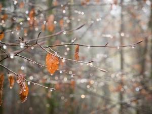 прогноз, погода, осень, похолодание, ветер, дожди, снег, погода в украине