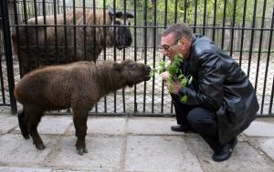 такины, зоопарк, николаев, животное, тибет, звери, мир животных