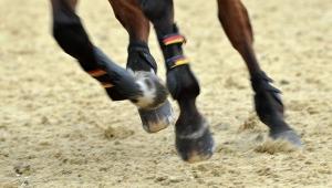 происшествие, общество, дети, лошадь, ранения