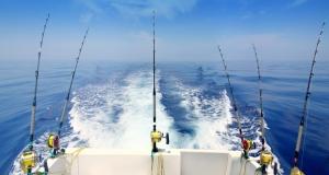 австралия, ихтиологи, наука, океан, рыба, фото