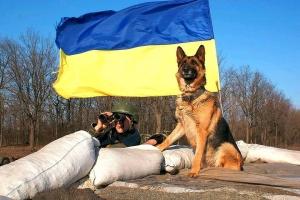 ато, мир животных, восток украины, армия украины, общество, фото, украина, донбасс
