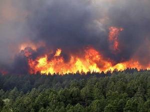 медицина, волгоградская область, лесные пожары, эвакуация, чп, происшествия, новости россии