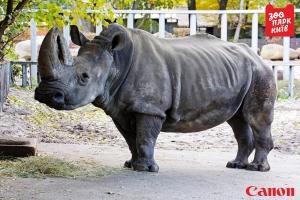 украина, киев, животные, носорог, происшествия, общество