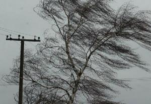 наталья диденко, закарпатье, ураган, румыния, непогода, ветер, шторм, стихия, новости украины