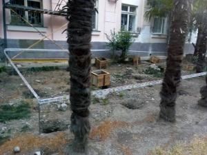 уничтожение веерных пальм в Ялте, редкие растения Крыма, природа Крыма, оккупационная власть Крыма