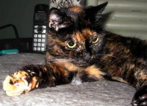самая взрослая кошка, сша, книга рекордов гиннеса, новости мира, общество