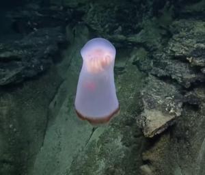Тихий океан, аномалия, видео, существо, феномен