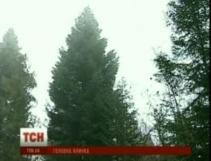 Елка, Киев, дерево, новый, год, площадь, Прикарпатье