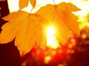 наталья диденко, осень, потепление, прогноз погоды, дождь, новости украины, атмосферный фронт