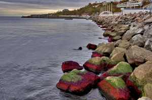 море, одесса, побережье, происшествия, красные водоросли,  фото, новости украины