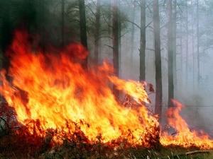 жара, пожары, экология, экосистема украины, спасатели, погода в украине, прогноз погоды, новости украины