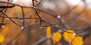 кульбида, прогноз погоды, дождь, похолодание, осень, температура воздуха, новости украины, киев, карпаты, львов, харьков, днепр