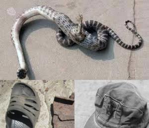 Чернобыль, феномен, человек-змея, мутант, происшествие, аномалия, новости дня