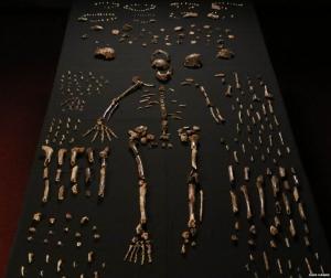 африка, ученые, раскопки, эволюция, общество