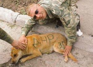 война на донбассе, донецк, днр, животные, собаки, фото, боевики, террористы, армия россии, новости украины